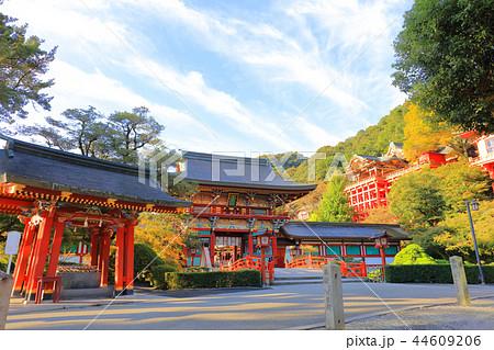 朝日を浴びる秋の祐徳稲荷神社(佐賀県鹿島市) 44609206