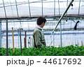 就農 農業 ハウス栽培 44617692