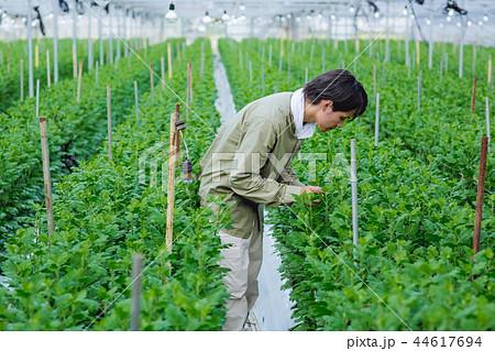 就農 農業 ハウス栽培 44617694