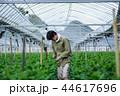 就農 農業 ハウス栽培 44617696