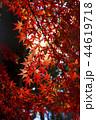 紅葉 秋 植物の写真 44619718