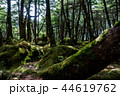 苔の森 44619762