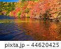 白駒の池 秋 紅葉の写真 44620425