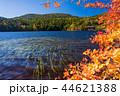 白駒の池 秋 紅葉の写真 44621388
