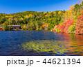 白駒の池 秋 紅葉の写真 44621394