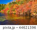 白駒の池 秋 紅葉の写真 44621396