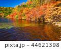 白駒の池 秋 紅葉の写真 44621398