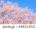 桜 花 春の写真 44621452