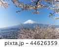 富士山 桜 花の写真 44626359