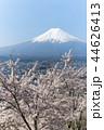 富士山 桜 染井吉野の写真 44626413