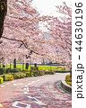 晴れ ソメイヨシノ 春の写真 44630196