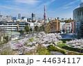 東京 六本木ヒルズ 毛利庭園の桜 44634117