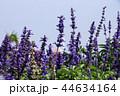 植物 工場 プランツの写真 44634164
