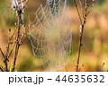 くも クモ スパイダーの写真 44635632