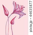花 芽 蕾のイラスト 44635877