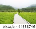 タデ原湿原 湿原 風景の写真 44638746