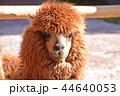 アルパカ 44640053