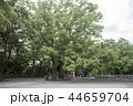 楠 巨樹 阿波大麻比古神社の写真 44659704