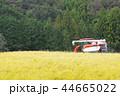 高アミロース米の収穫 44665022