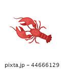 赤色 エビ ザリガニのイラスト 44666129