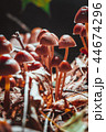 菌類 真菌 きのこの写真 44674296