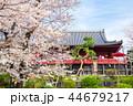 上野恩賜公園 春 満開の桜 (東京都台東区) 2018年3月 44679217