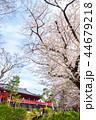 上野恩賜公園 春 満開の桜 (東京都台東区) 2018年3月 44679218