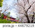 上野恩賜公園 春 満開の桜 (東京都台東区) 2018年3月 44679219