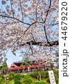 上野恩賜公園 春 満開の桜 (東京都台東区) 2018年3月 44679220