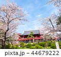 上野恩賜公園 春 満開の桜 (東京都台東区) 2018年3月 44679222