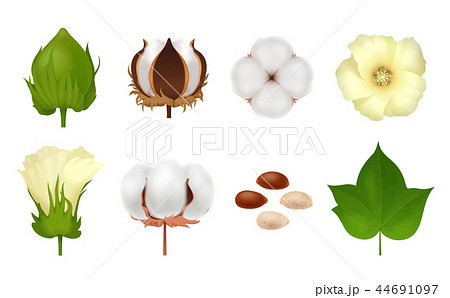 Cotton Realistic Icon Set 44691097