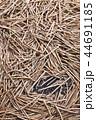 収穫した沢山の黒大豆のさやと豆 44691185
