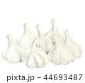大蒜 にんにく 野菜のイラスト 44693487