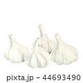 大蒜 にんにく 野菜のイラスト 44693490