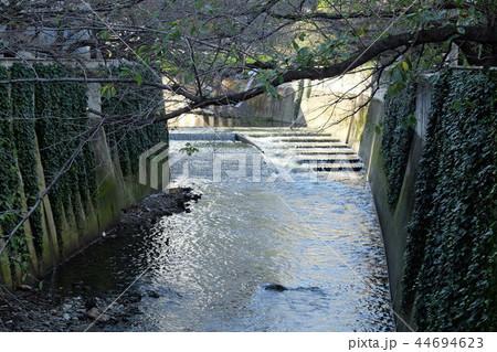 神田川の魚道 東京都 44694623