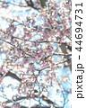 雪 積雪 桜の写真 44694731