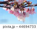 雪 積雪 桜の写真 44694733