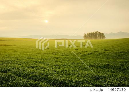 朝靄の高原風景 44697130