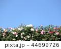 薔薇イメージ 44699726