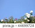薔薇イメージ 44699728