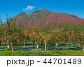 岩木山 りんご 秋 44701489