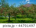 岩木山 りんご 秋 44701497