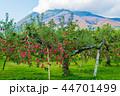 岩木山 りんご 秋 44701499