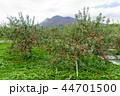 岩木山 りんご 秋 44701500