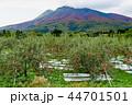 岩木山 りんご 秋 44701501