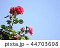 薔薇イメージ 44703698