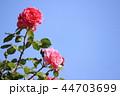 薔薇イメージ 44703699
