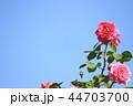 薔薇イメージ 44703700