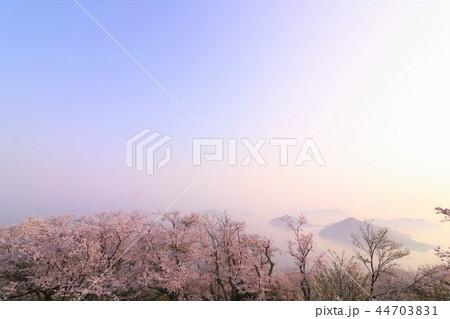 紫雲出山の桜と瀬戸内海 44703831