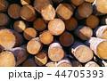 Woods texture 44705393